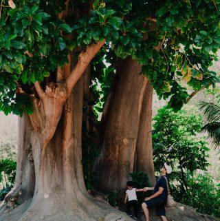 Get lost in beautiful nature, Fullerton Arboretum